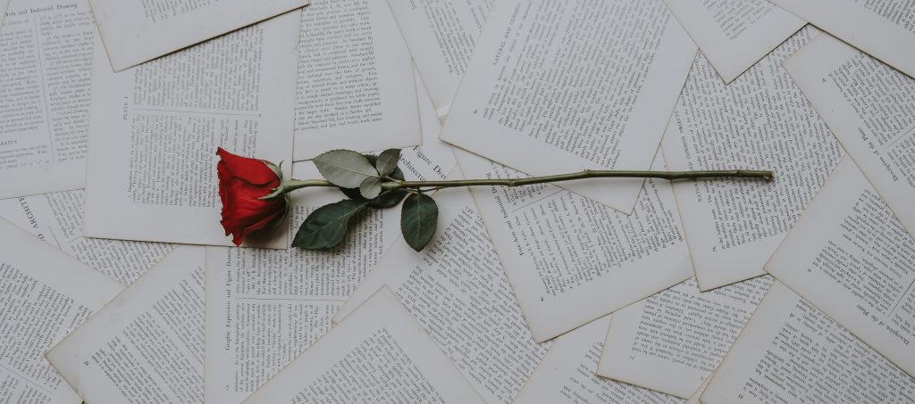 A red rose lying on book pages